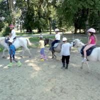 cheval_argueil.jpg