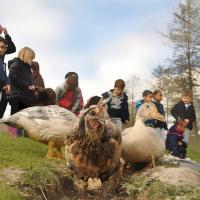 IMG_1736_Groupe_enfants_poules_Argueil__2_.jpg