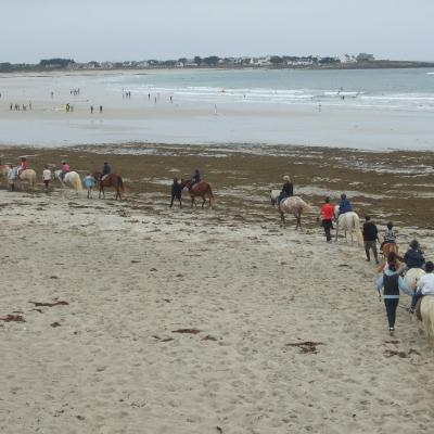 Cheval plage<br>